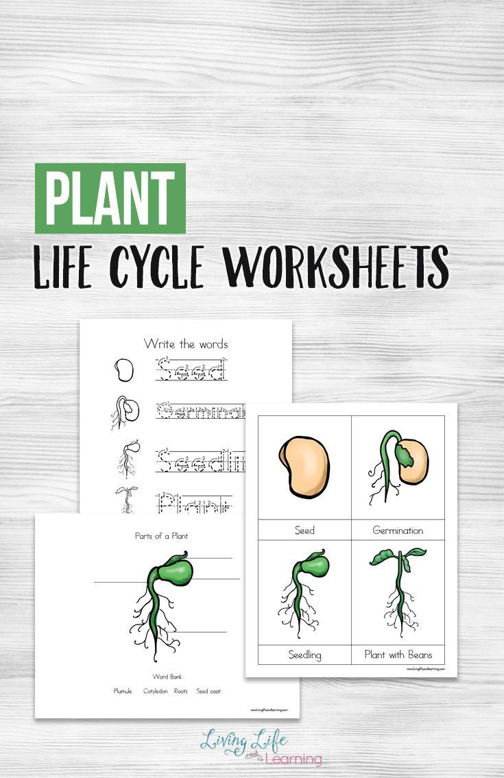 Plant Life Cycle Worksheets For Kids Plant Life Cycle
